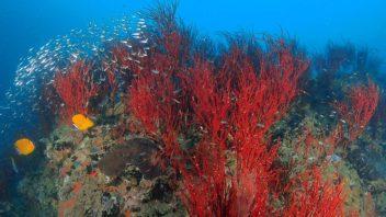 (Open Water) เรียนดำน้ำที่กรุงเทพฯ ออกทะเลที่เกาะเต่า