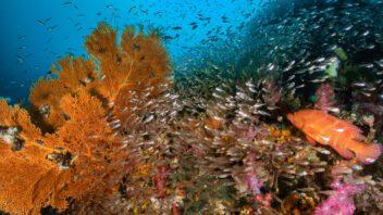(Open Water) เรียนดำน้ำที่กรุงเทพ ออกทะเลที่สิมิลัน